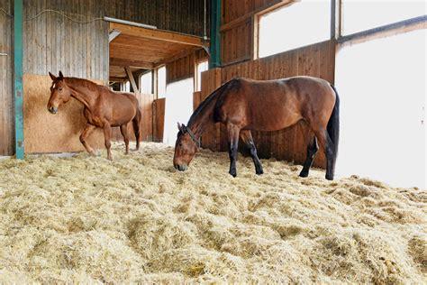 pferde stall pferde k 246 nnen sich im stall besch 228 ftigen bei cavallo de