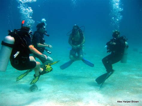 roatan dive best scuba diving west end roatan sons