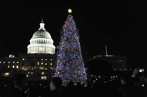 colorado scout lights capitol christmas tree the denver post