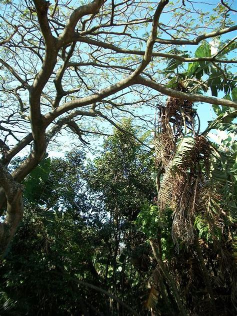 kwazulu natal coastal lowland forest wikipedia