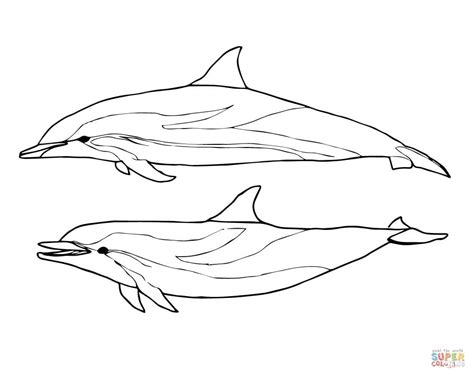 coloring page of bottlenose dolphin two striped dolphins coloring page free printable