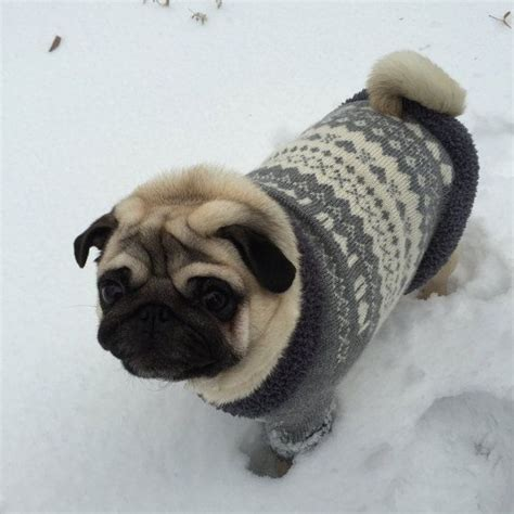 sweaters for pugs 128 best images about dogs clothen on mop knit crochet and coats