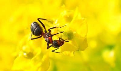Ameisen Auf Der Terrasse 4711 by Ameisen Bek 228 Mpfen