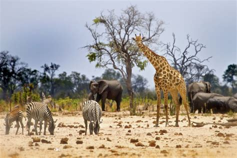 5 Safari Stuff To See by Animals 64 Things You Don T Guideadvisor
