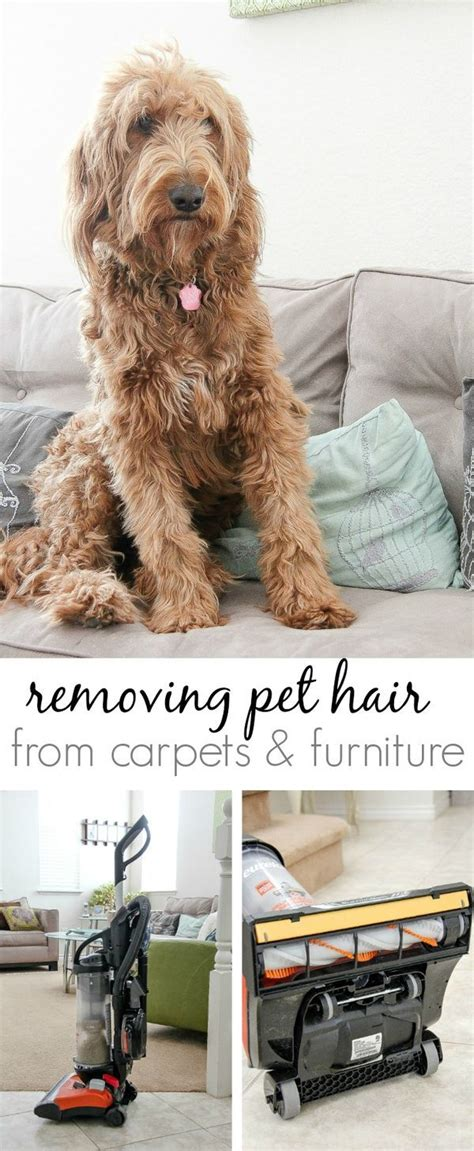 How To Remove Pet Hair From by 1000 Ideas About Remove Pet Hair On Cat Urine