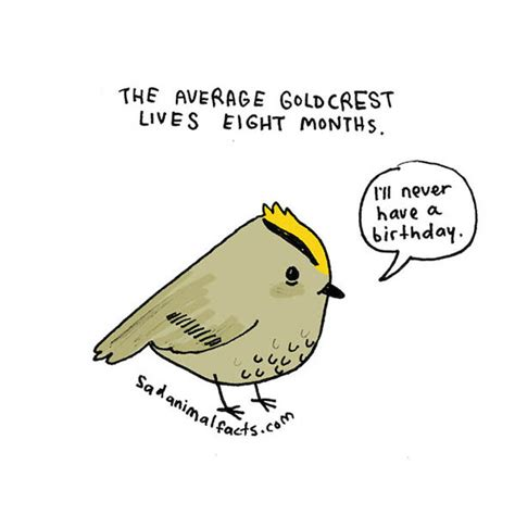 sad animal facts sad animal facts cute illustrations with sobering facts design swan