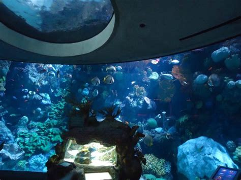 Shed Aquarium by Reef Picture Of Shedd Aquarium Chicago Tripadvisor