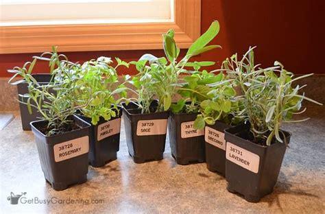 Kitchen Herb Garden Design by Plants For Indoor Kitchen Herb Garden