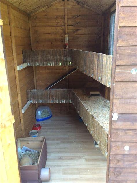 Guinea Pig Shedding inside the guinea pig shed farming ideas