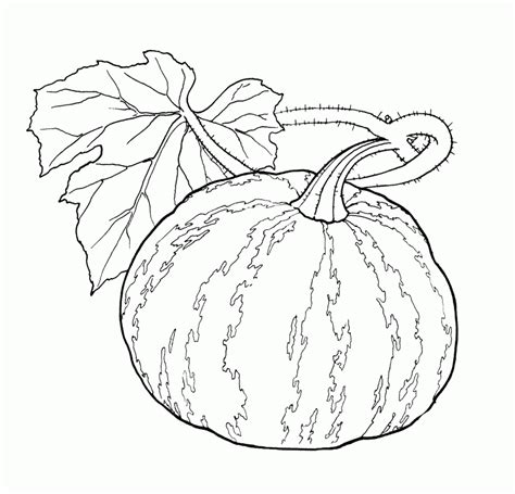 pumpkin leaf coloring pages vegetables pumpkin and leaves a wide coloring page for