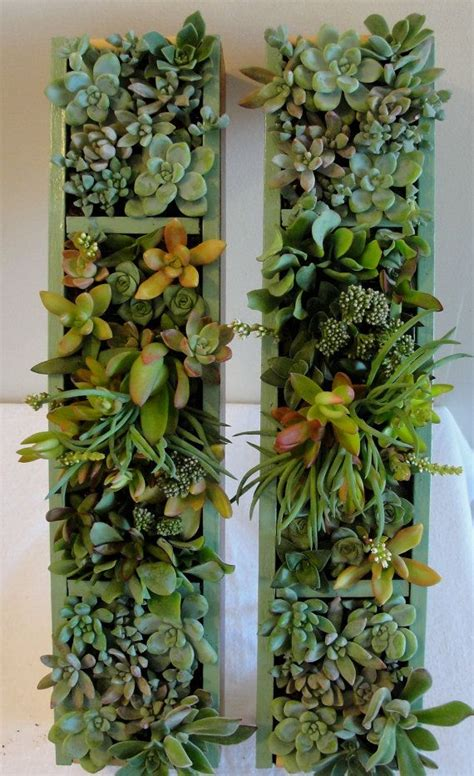 Succulent Vertical Garden Two Vertical Succulent Gardens With A Pretty Colored