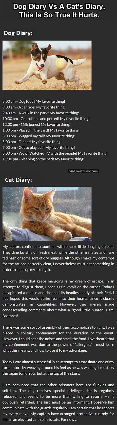 vs cat diary diary vs cat diary pictures photos and images for