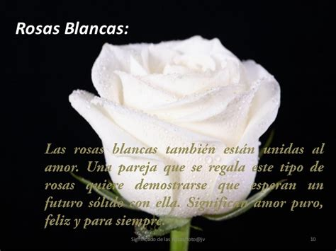imagenes de flores blancas significado imagenes de rosas blancas con frases de amistad imagui