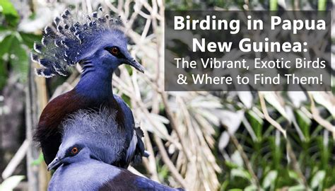 birds of paradise png birding tips birding tours