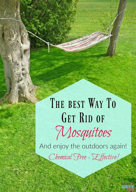 How To Get Rid Of Mosquitoes In Backyard by How To Get Rid Of Mosquitoes In Backyard Outdoor Goods