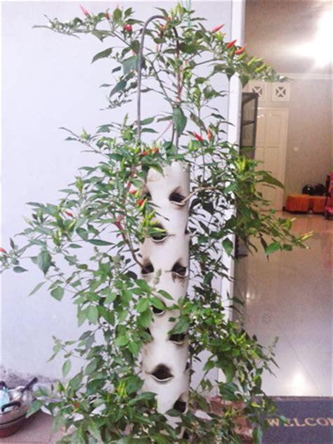cara membuat media hidroponik dari pipa 5 langkah mudah dan tutorial menanam cabai vertikultur
