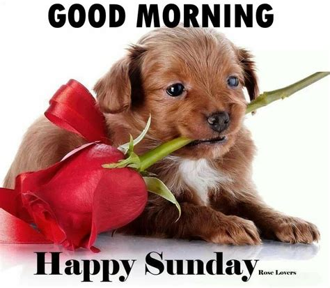 imagenes good morning happy sunday good morning happy sunday pictures photos and images for
