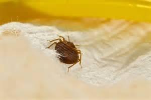 is it possible to permanently remove bed bugs completely