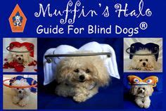 Activities For Blind Dogs 1000 Images About Mollydog On Pinterest Yorkie