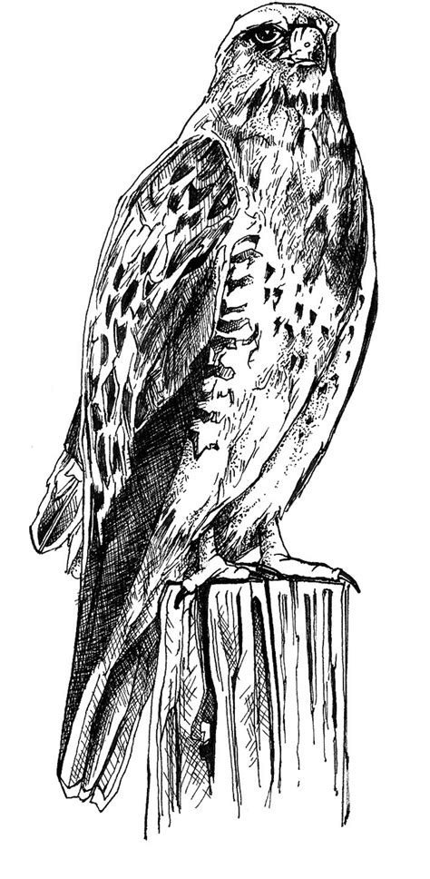 Sketches Black And White by File Black And White Line Drawing Of Bird Jpg