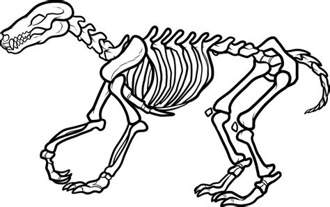 free coloring pages of bones free printable skeleton coloring pages for