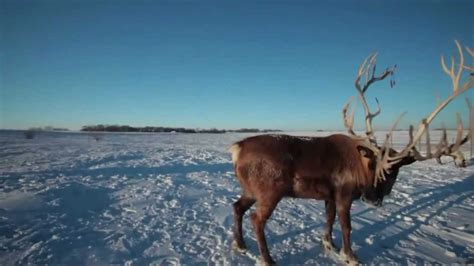 rudolph  red nosed reindeer hd youtube