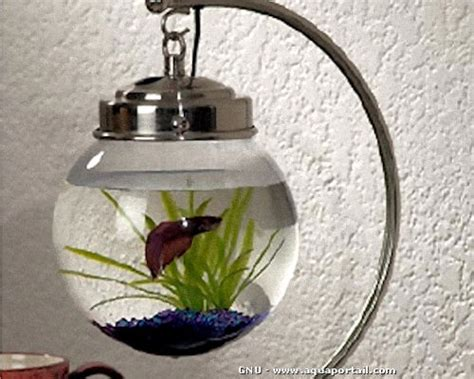 d 233 coration aquarium poisson combattant encombrement place
