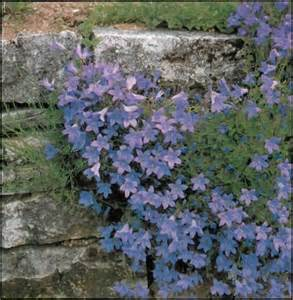 growing plants in walls