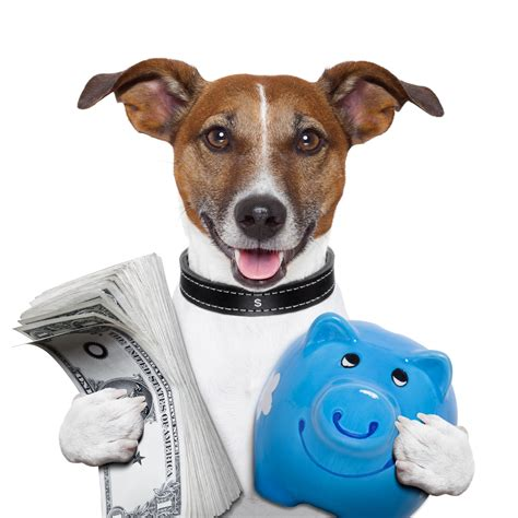 best puppy insurance 5 steps to finding the best pet insurance
