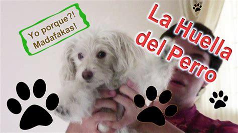 libro las huellas dispersas la huella del perro el libro troll retotroll reto3 youtube