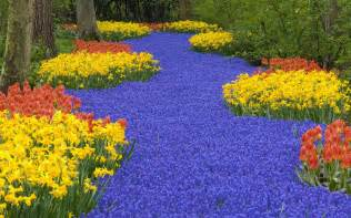 Amazing Flower Garden Amazing Flower Garden 1680x1050