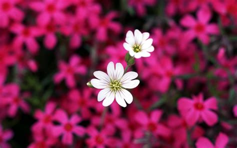 desktop wallpaper of flowers flowers desktop wallpaper flowers pinterest
