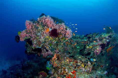 dive gili islands fish id manta dive resort gili air