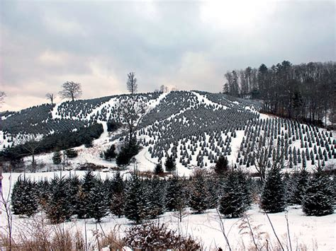 watauga county christmas tree association boone north