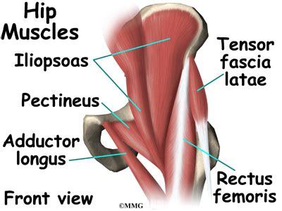 hip flexor diagram the adductor longus time pressure