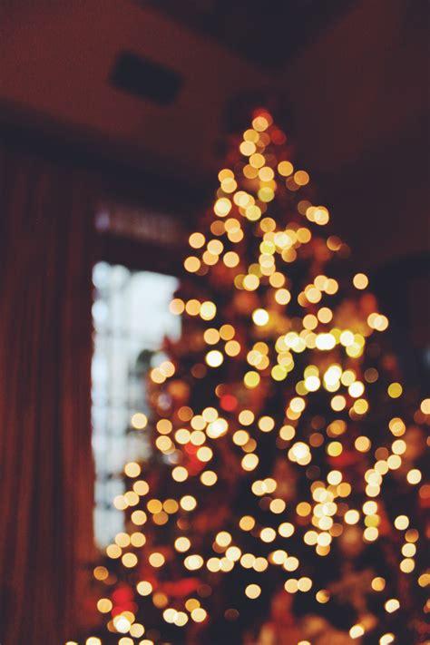 christmas tree flower lights christmas lights yellow christmas lights card and decore