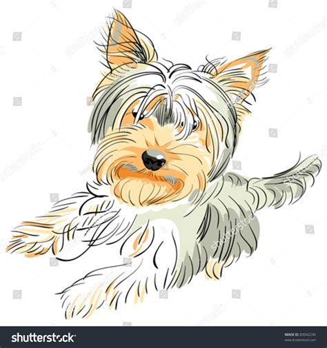 yorkie hind leg problems vector color sketch purebred terrier and black stands on its hind