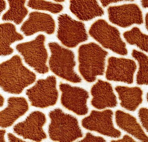 natural pattern image natural pattern of giraffe fur in detail stock photo