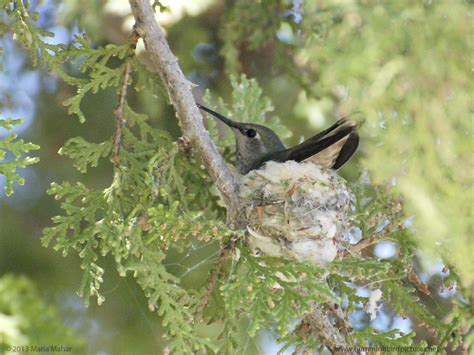 related keywords suggestions for hummingbird nest cam