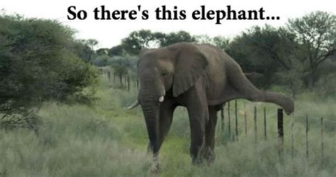 Elephant Memes - elephant meme www imgkid com the image kid has it