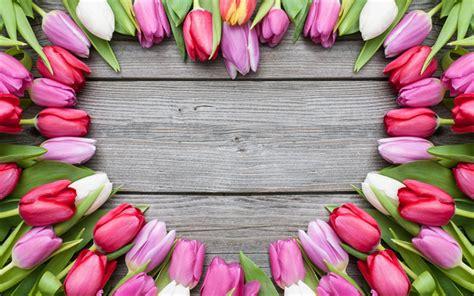descargar fondos de pantalla flores de muchos colores hd descargar fondos de pantalla tulipanes de color rosa