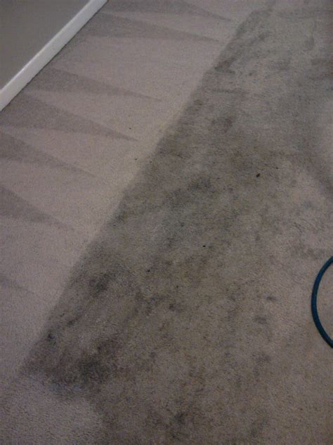 superior carpet and upholstery cleaning superior carpet cleaning rug cleaning oriental rugs