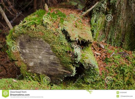 mossy trunk stock photo image 51504940