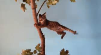 windy gif cat discover gifs