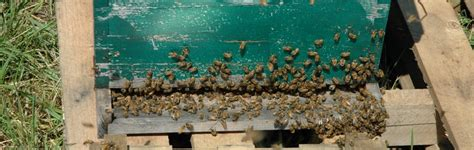 raising honey bees in your backyard 73 backyard beekeeping for beginners beginner beekeeping