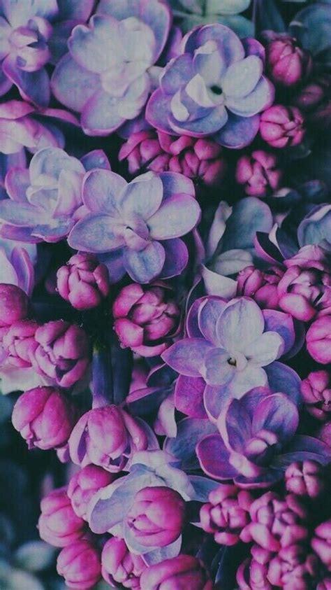 immagine  flowers purple  wallpaper wallpapers