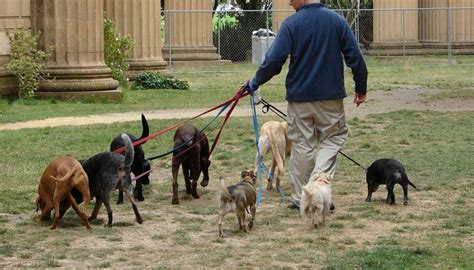 dog sitter jobs dog walker jobs where and how to find good dog walking