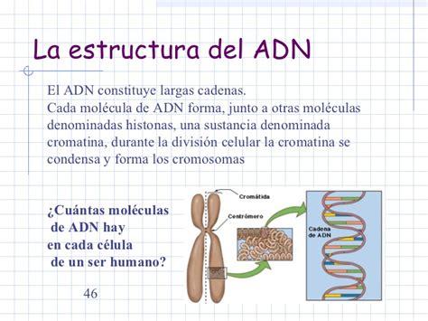 cuantas cadenas de adn tiene un humano la gen 233 tica molecular