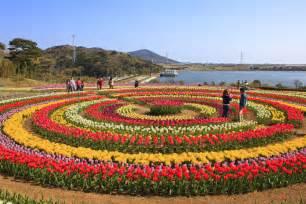 Tulip Flower Garden In India At The Park Tulip Garden Interesting Photos Galleries S Flickr