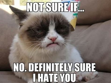 19th Birthday Meme - 164 best images about grumpy cat on pinterest cats